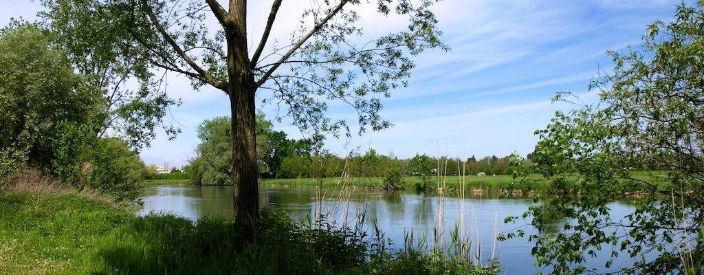 Promenades à la Robertsau : Anguilles – Civelles – Cité de l'Ill