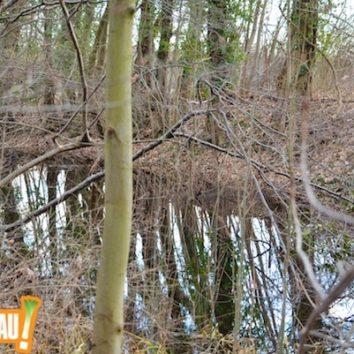 Le canal des Français en cale sèche ?
