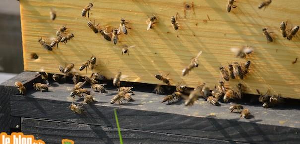 Festival des abeilles et de la biodiversité : 4° édition