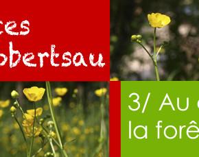 Vacances à la Robertsau : une journée de promenade au cœur de la forêt !