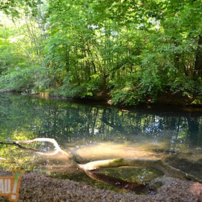 Balade découverte en forêt de la Robertsau samedi 25 avril