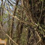 Lettre ouverte de Robert Grossmann sur l'état de la forêt du Rhin.