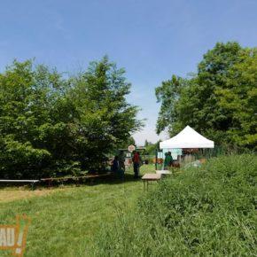 Vidéo : Festival Abeilles et Biodiversité, allez-y dare-dare !