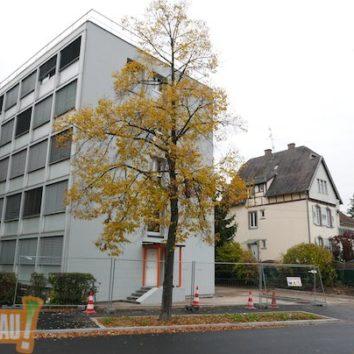 Cité universitaire de la Robertsau : Les petites bêtes toujours à la une