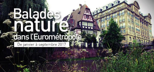 Balades Nature à la Robertsau avec Alsace Nature