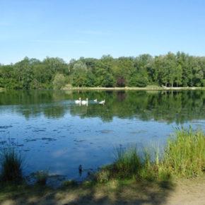 Qui veut vendre des boissons à l'étang du Blauelsand ?