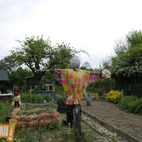 Les jardins familiaux de la Robertsau