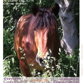 Journée du Bien être du cheval dimanche 11 juin