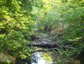 Forêt de la Robertsau : le classement enfin !