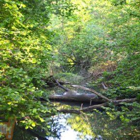 Classement de la forêt de la Robertsau : avis favorable du Conseil National de la Protection de la Nature