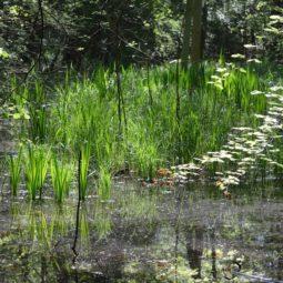 Classement de la forêt de la Robertsau : Avis favorable de la commission d'enquête