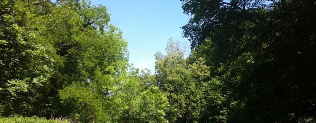 [Tribune] La forêt de la Robertsau, notre bien commun !