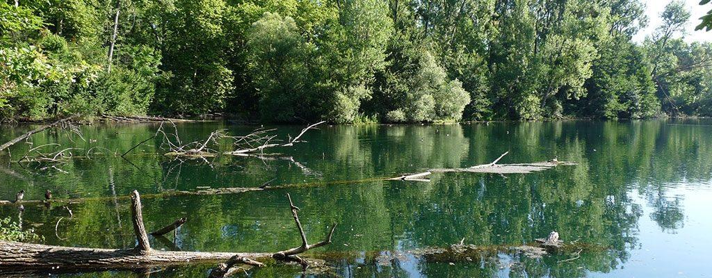 Alsace Nature : Forêt de la Robertsau, un bien commun à protéger