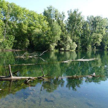 Forêt de la Robertsau : la contribution d'Alsace Nature