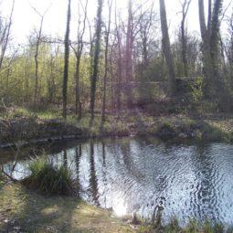 Contribution de l'ADIR à l'enquête publique sur le classement de la forêt de la Robertsau en réserve naturelle