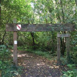 Le parcours de santé de la forêt de la Robertsau est-il à l'abandon ?