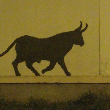 Les taureaux sont lâchés !