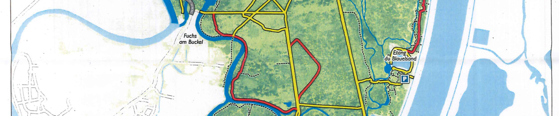 Charalose du frêne : l'accès la forêt de la Robertsau restreint