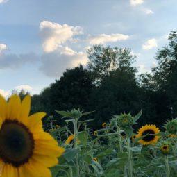 Une jolie fleur à la Robertsau