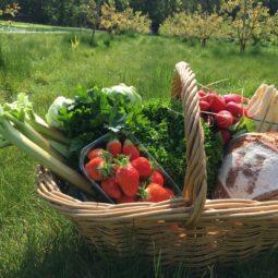 Jardin de Marthe : les légumes et les fruits sont maintenant à portée de clic !