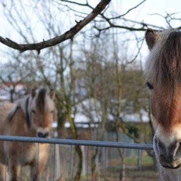 Brocante aux amis du cheval le 16 septembre annulée