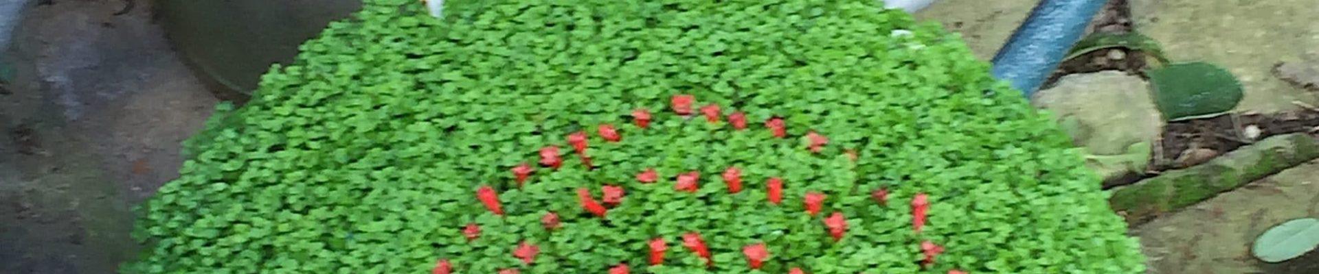 Secret de plantes : nouvelle exposition au CINE de Bussierre