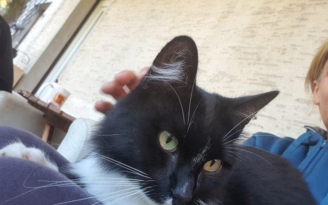 [SOS CHAT] Qui a perdu un chat ?