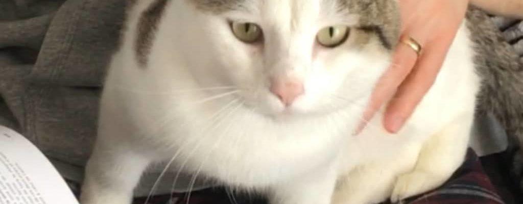 [SOS Chat] : Qui a vu Tika ?