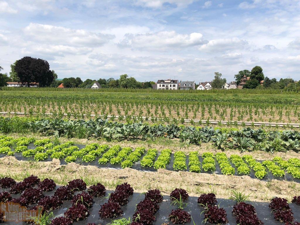 Legumes A Mettre Dans Le Jardin le jardin de marthe à nouveau victime d'un vol de légumes