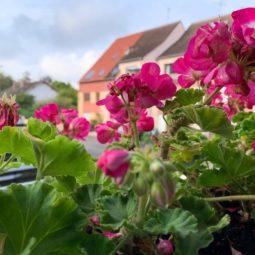 Une jardinière de lierre pour bien faire?