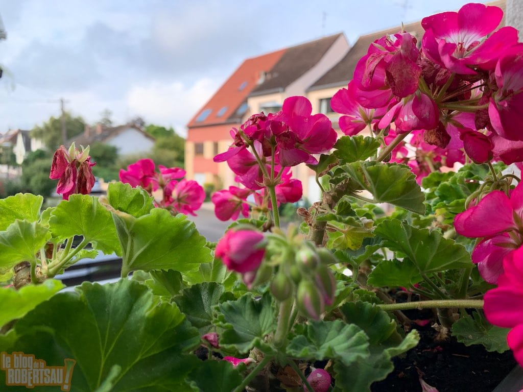 Une jardinière de lierre pour bien faire ?