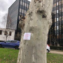 Les arbres de la rue Wenger Valentin sont-ils en danger ?