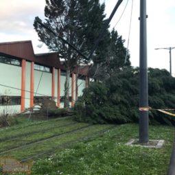 Tempête Ciara : les dégâts à la Robertsau