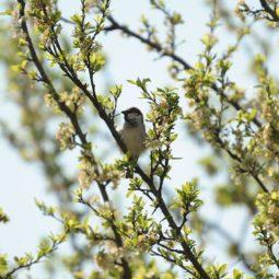 Le printemps des oiseaux !