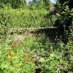 Un été très nature au CINE de Bussierre