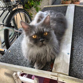 [SOS CHAT] Qui a vu Casper ?