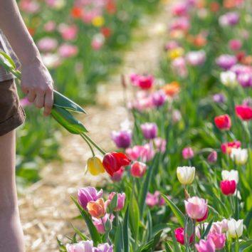 Des fleurs en libre service