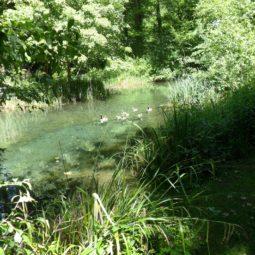 Classement de la forêt de la Robertsau : la réaction des pêcheurs