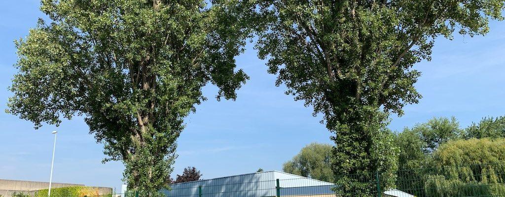 Nouveaux horaires pour les piscines de la Robertsau et du Wacken