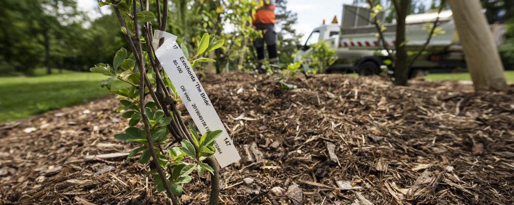 Planter des arbres à la Robertsau ? Bonne idée mais où ?