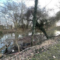 Le jetable finit dans le Muhlwasser