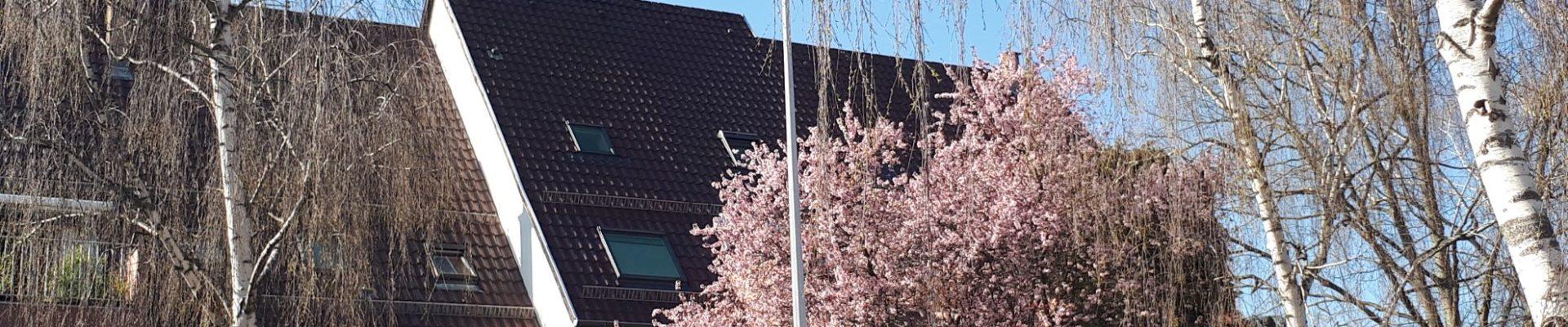 [Balade] La Robertsau en fleurs