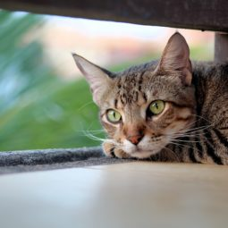 Une association robertsauvienne pour la défense des chats errants